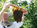"Beekeeping as a business – Practical ""How To"" guide"